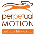 Perpetual Motion Animal Chiropractic